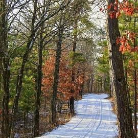 Inspirational Walk Through the Woods, Minnesota by Ann Brown Inspirational