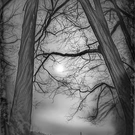 Intertwining  by Jim Love