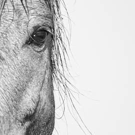 Intimate Wild Horse Portrait - North Carolina Outer Banks by Bob Decker