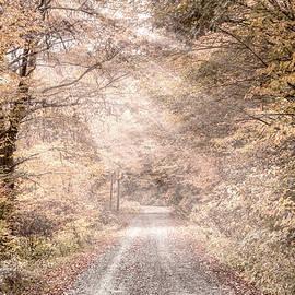 Into the Soft Autumn Mist  by Debra and Dave Vanderlaan