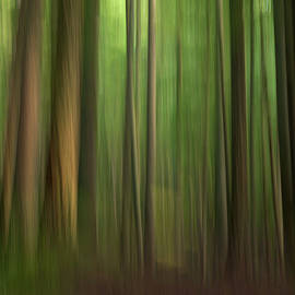 Into the Woods by Kelly Coultas