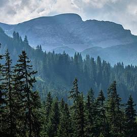 Into the woods.  Lauterbrunnen Valley. Alps. Switzerland by Guido Montanes Castillo