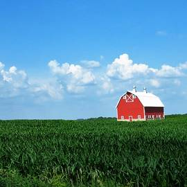 Iowa's Red, White and Blue  by Lori Frisch