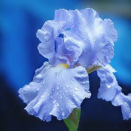 Iris Blues by Marilyn DeBlock