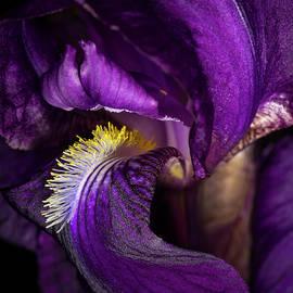 Iris  by Medicine Tree Studios