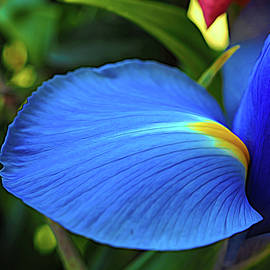 Iris Turning Over a New Leaf by Bill Swartwout