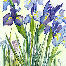 Irises by Cheryl Harawitz