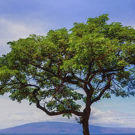 Island Tree by Kelly Wade