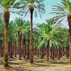 Israeli Date Palm Orchard by Brian Tada
