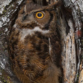 I've got my eye on you by Christopher Haire