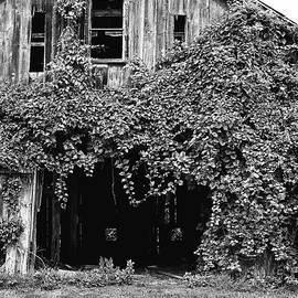 Ivy Barn by Steven Nelson