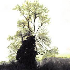 Ivy Clad Tree Silhouette 3 V by Lynne Iddon
