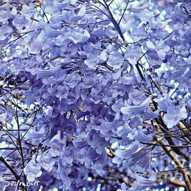 Jacaranda Blossoms by Leanne Seymour