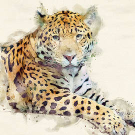 Jaguar Art by Darren Wilkes