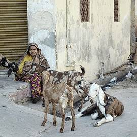 Jaipur Woman With Goats by Toni Abdnour