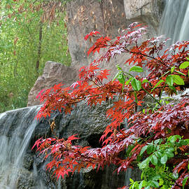 Japanese Garden Waterfall Albuquerque by Mary Lee Dereske