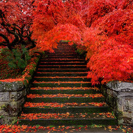 Japanese Maple Staircase by Wes and Dotty Weber