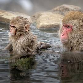 Japanese Snow Monkey Mom and Baby III by Joan Carroll