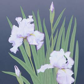 Japaneses Water Iris by Spadecaller