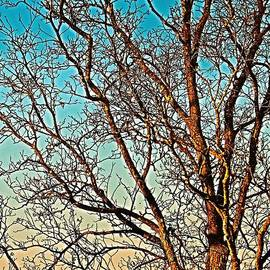 Jeff Road Tree facing LEFT in Madison Alabama by Barbara Donovan