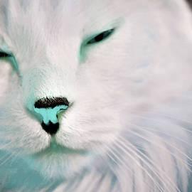 Jenny Blue Nose by Aliceann Carlton