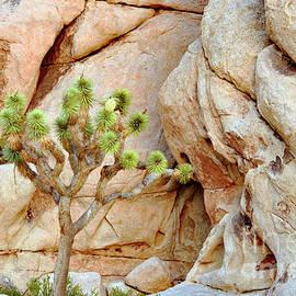 Joshua Tree against the Rocks by Debby Pueschel