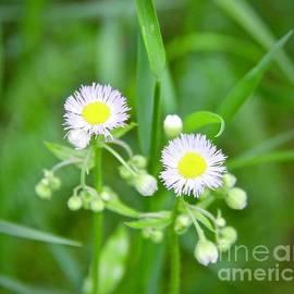 June Wildflowers in Minnesota by Ann Brown