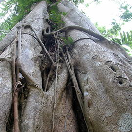 Jungle tree Australia