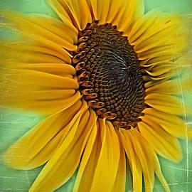 Just Like The Sun by Trudee Hunter
