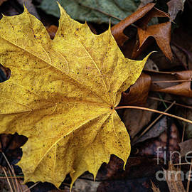 Just One Yellow Leaf by Linda Howes