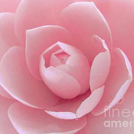 Just Pink by Kim Tran