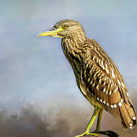 Juvenile Black-crowned Night Heron by Donna Kennedy