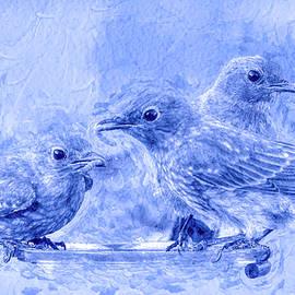 Juvenile Bluebirds II PS II  Blue Tint by Linda Brody