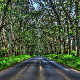 Kauai Eucalyptus Tree Tunnel South Shore Kauai Hawaii Landscape Art by Reid Callaway