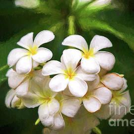 Kauai Plumeria by Scott Pellegrin