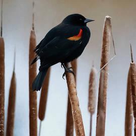 Keep Singing - Bird Art by Jordan Blackstone