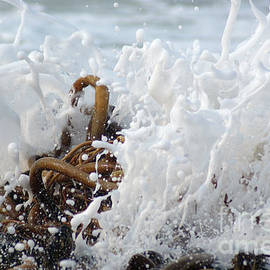 Kelp Attack by Waves