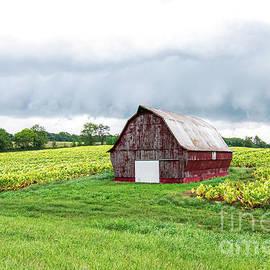 Kentucky Tobacco Farm by Jennifer Jenson