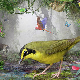 Kentucky Warbler In Costa Rican Cloud Forest by R christopher Vest