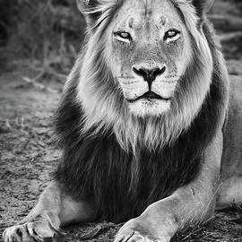 Kgalagadi black maned lion by Etienne Outram