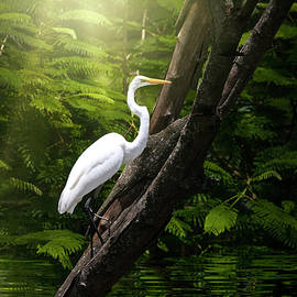 Kingdom of the Great White Egret  by Mark Andrew Thomas