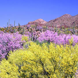King's Canyon In Spring by Douglas Taylor