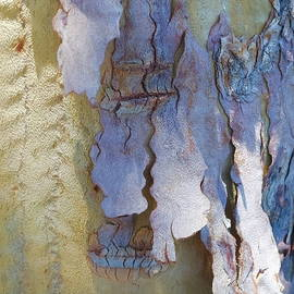Kinky Bark by Lynda Lehmann
