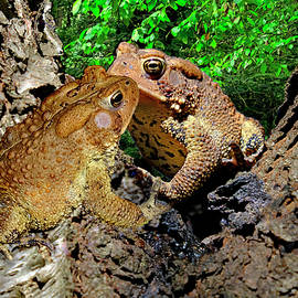 Kiss Of The Toads by Constance Lowery
