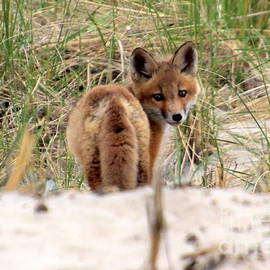 Kit in the Dunes by Lennie Malvone