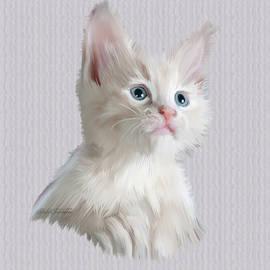 Kitten Portrait by Omid Gohardani