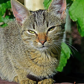 Kitten squinting in sunshine by Tibor Tivadar Kui