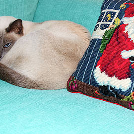 Kitty by Christmas Pillow by Sally Weigand