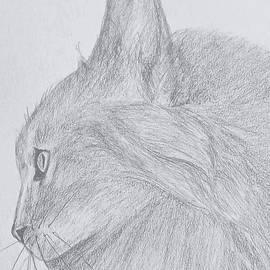 Kitty cat by Phillip Villarreal