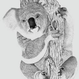 Koala by Patricia Hiltz